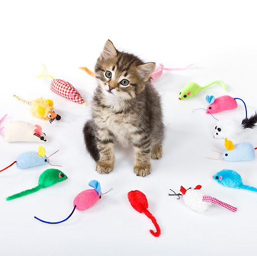 CAT 03 KH0474 01 © Kimball Stock Tabby Kitten Surrounded By Fabric Mice On White Seamless
