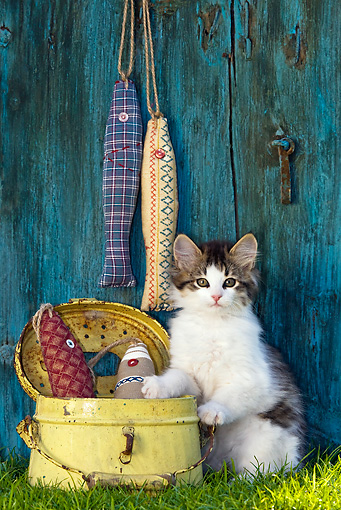 CAT 03 KH0477 01 © Kimball Stock White And Tabby Kitten Sitting By Metal Canister On Grass By Fabric Fish