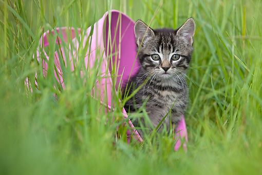 CAT 03 KH0508 01 © Kimball Stock Tabby Kitten Sitting In Tipped Pink Bucket In Grass France