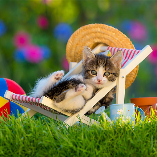 CAT 03 KH0836 01 © Kimball Stock Tabby Kitten Laying In Lawn Chair