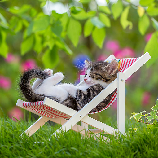 CAT 03 KH0837 01 © Kimball Stock Tabby Kitten Laying In Lawn Chair