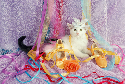 CAT 03 RC0132 01 © Kimball Stock Kitten Wearing Tiara Laying By Orange Slippers And Ribbons