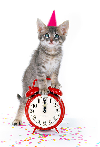 CAT 03 RK0185 06 © Kimball Stock Gray Tabby Kitten Standing On Alarm Clock On White Seamless