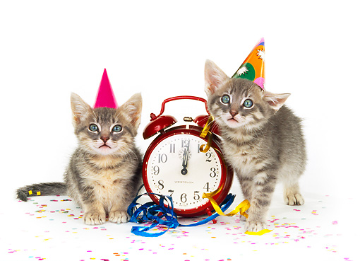 CAT 03 RK0188 06 © Kimball Stock Gray Tabby Kittens Sitting By Clock On White Seamless Studio