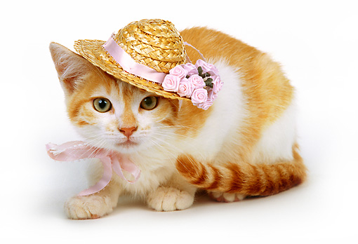 CAT 03 RK0214 10 © Kimball Stock Red And White Kitten Wearing Straw Hat Laying On White Seamless