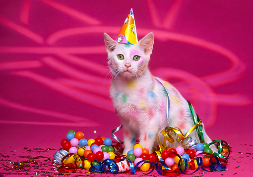 CAT 03 RK1142 13 © Kimball Stock Colorful Kitten Wearing Party Hat