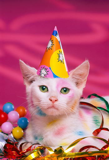 party - Animal Stock Photos - Kimballstock