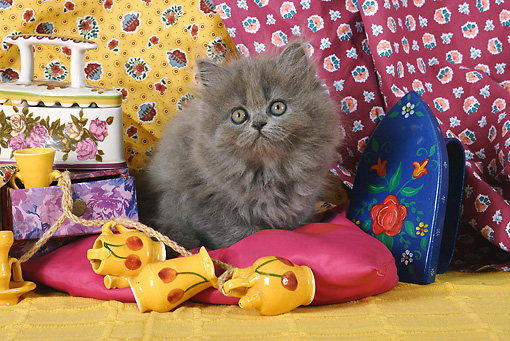 CAT 03 SJ0020 01 © Kimball Stock Persian Kitten Sitting On Pink Pillow By Ceramic Decorations
