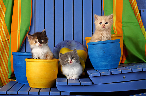 CAT 03 SJ0046 01 © Kimball Stock Calico, Gray And Orange Tabby Kittens Sitting In Blue And Yellow Flower Pots On Stairs