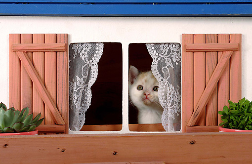 CAT 03 SJ0049 01 © Kimball Stock Calico Kitten Looking Out Of Dollhouse Window