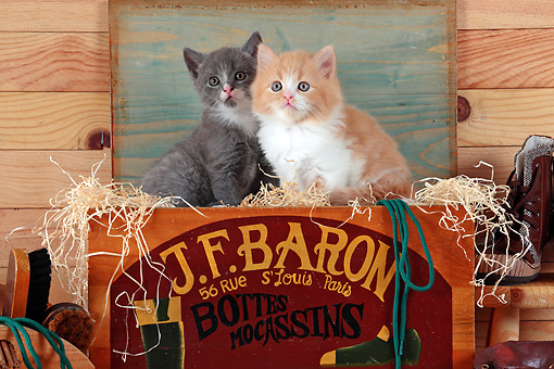 CAT 03 SJ0079 01 © Kimball Stock Two Kittens Sitting In Wooden Shoe Box