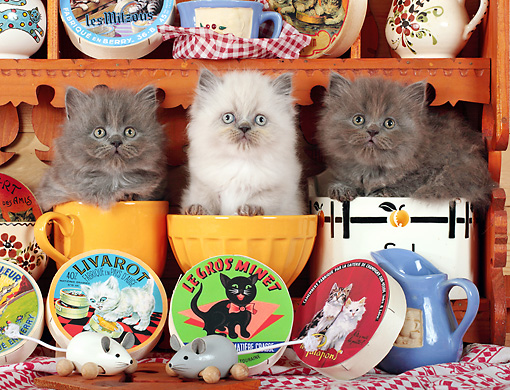 CAT 03 SJ0085 01 © Kimball Stock Three Kittens Sitting In Mugs By Cat Food And Toy Mice