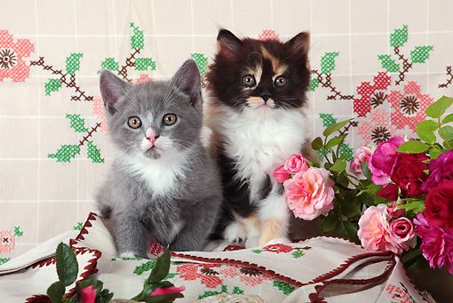 CAT 03 SJ0101 01 © Kimball Stock Two Kittens Sitting On Embroidered Cloth By Pink And Red Roses