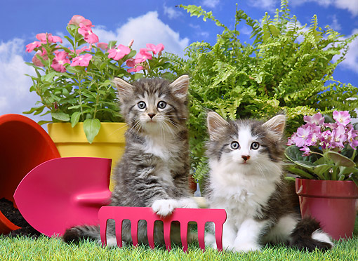 CAT 03 XA0010 01 © Kimball Stock Tabby And Calico Kittens Sitting With Farm Tools And Flowers