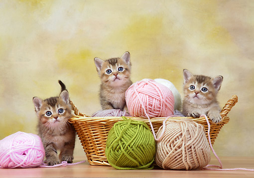 CAT 03 XA0016 01 © Kimball Stock Tabby Kittens Sitting In Basket With Yarn