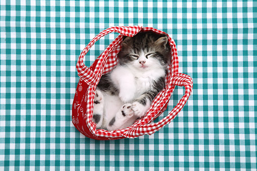 CAT 03 XA0018 01 © Kimball Stock Tabby Kitten Laying In Basket On Checkered Cloth