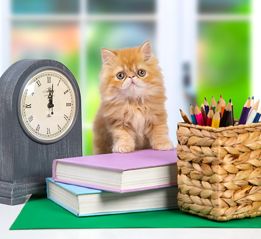 CAT 03 XA0055 01 © Kimball Stock Orange Tabby Kitten Sitting With Books, Clock, And Pencils