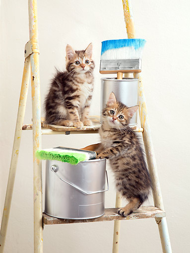 CAT 03 XA0059 01 © Kimball Stock Tabby Kittens Sitting On Ladder With Paint Buckets