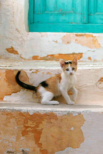 CAT 03 KH0104 01 © Kimball Stock Calico Tabby Greek Island Kitten Sitting On Stairs
