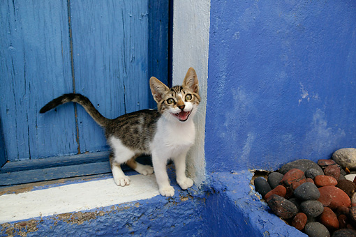 CAT 03 KH0112 01 © Kimball Stock Tabby And White Greek Island Kitten Meowing By Blue Wooden Door