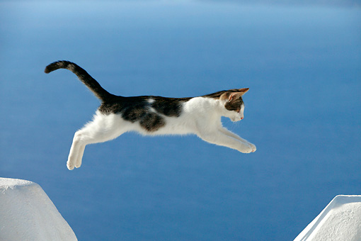 CAT 03 KH0117 01 © Kimball Stock Tabby And White Greek Island Kitten Jumping Over Gap In White Wall