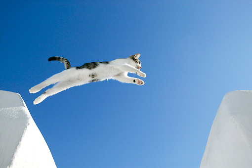 CAT 03 KH0118 01 © Kimball Stock Tabby And White Greek Island Kitten Jumping Over Gap In White Wall