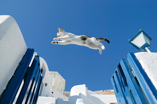 CAT 03 KH0119 01 © Kimball Stock Tabby And White Greek Island Kitten Jumping Over Blue Gate In White Wall