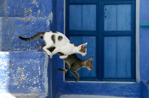 CAT 03 KH0125 01 © Kimball Stock Two Tabby Greek Island Kittens Jumping Down Off Of Blue Stairs