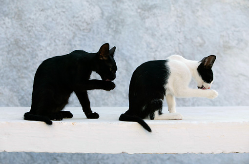 CAT 03 KH0140 01 © Kimball Stock Black And Black And White Greek Island Kittens Sitting On White Wall Licking Paws