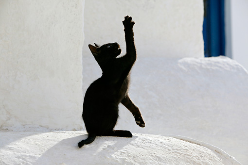 CAT 03 KH0144 01 © Kimball Stock Black Greek Island Kitten Sitting On White Wall Reaching Up With Paw
