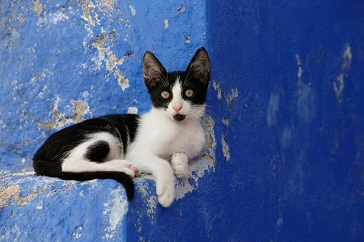CAT 03 KH0149 01 © Kimball Stock Black And White Greek Island Kitten Laying On Blue Stairs
