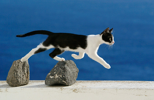 CAT 03 KH0154 01 © Kimball Stock Black And White Greek Island Kitten Running On Top Of Rocks On White Wall By Ocean