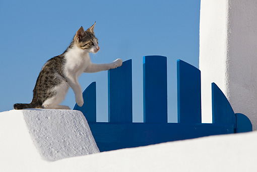 CAT 03 KH0168 01 © Kimball Stock Tabby And White Greek Island Kitten Sitting On White Wall By Blue Gate