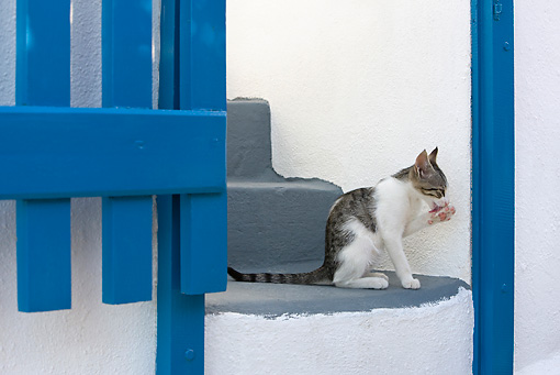 CAT 03 KH0169 01 © Kimball Stock Tabby And White Greek Island Kitten Sitting On Gray Stairs By Blue Gate Licking Paw