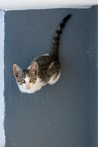 CAT 03 KH0171 01 © Kimball Stock Tabby And White Greek Island Kitten Sitting On Gray Stairs Looking Up