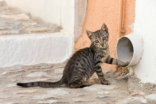 CAT 03 KH0202 01 © Kimball Stock Gray Tabby Greek Island Kitten Sitting By Pipe In Wall