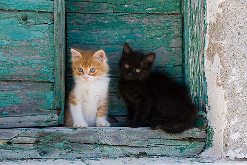 CAT 03 KH0208 01 © Kimball Stock Two Greek Island Kittens Sitting By Green Wooden Shutter