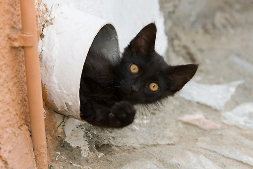 CAT 03 KH0212 01 © Kimball Stock Black Greek Island Kitten Peeking Out Of Pipe In Wall
