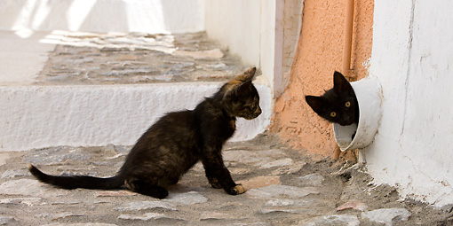 CAT 03 KH0213 01 © Kimball Stock Tortie Greek Island Kitten Looking At Black Greek Island Kitten In Pipe In Wall