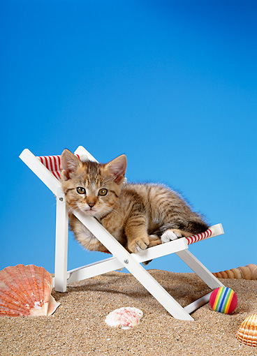 CAT 03 KH0215 01 © Kimball Stock Brown Tabby Kitten Sitting In Beach Chair
