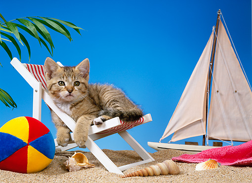 CAT 03 KH0216 01 © Kimball Stock Brown Tabby Kitten Sitting In Beach Chair