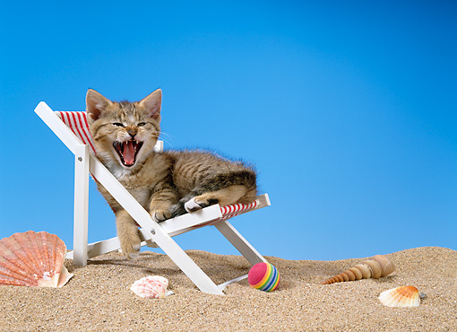 CAT 03 KH0217 01 © Kimball Stock Brown Tabby Kitten Sitting In Beach Chair Yawning