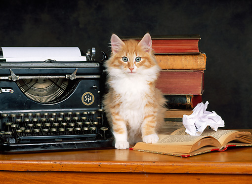 CAT 03 KH0220 01 © Kimball Stock Norwegian Forest Cat Kitten Sitting On Desk With Typewriter And Books