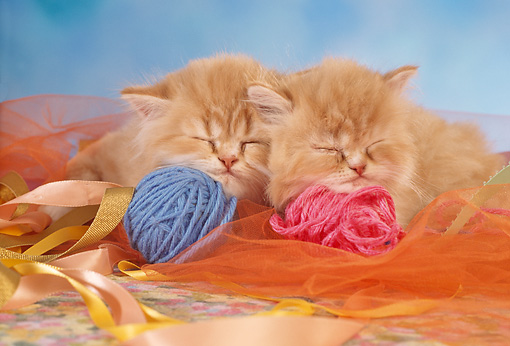 CAT 03 RC0020 01 © Kimball Stock Portrait Of Two Red Kittens Sleeping With Balls Of Yarn Studio