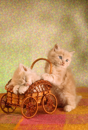 CAT 03 RC0033 01 © Kimball Stock Portrait Of Red Kittens Playing With Wicker Cart