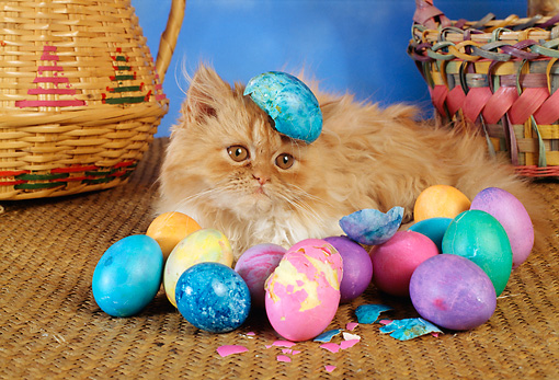 Image result for cat and easter basket