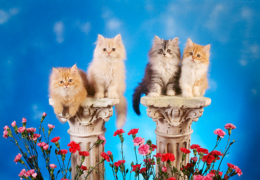 CAT 03 RC0069 01 © Kimball Stock Four Gray And Red Persian Kittens Sitting On Pedestals By Flowers