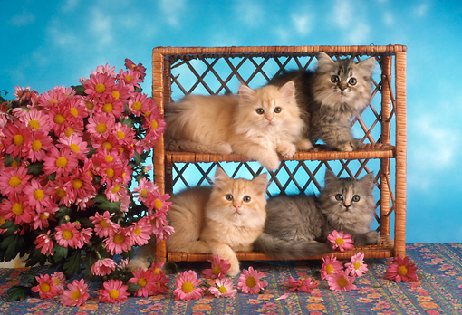 CAT 03 RC0127 01 © Kimball Stock Four Tabby Kittens Laying In Wicker Shelves By Pink Flowers