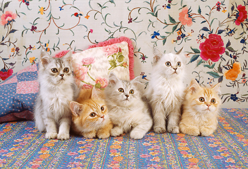 CAT 03 RC0128 01 © Kimball Stock Five Tabby Kittens Laying And Sitting On Flowery Carpet