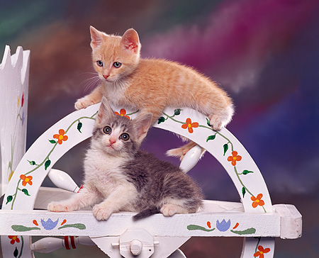 CAT 03 RK0823 01 © Kimball Stock Two Kittens Laying On Wheelbarrow